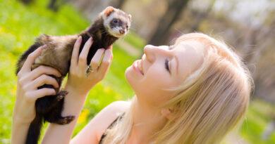 Cute Ferrets start an Online Business