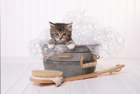 Best Cat Grooming Techniques