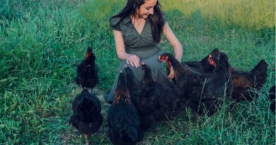 Chickens can Teach WAHMs How To Relieve Stress!